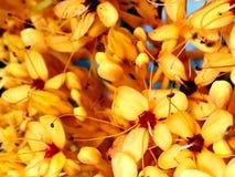 Bloemenbehang stock afbeelding