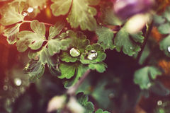 Bloemenbladeren als achtergrond na regen Stock Afbeelding