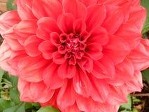 Bloemenbloei Royalty-vrije Stock Afbeeldingen