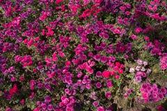 bloemenbloei die een bloemenachtergrond maken stock foto