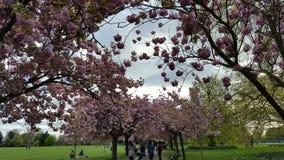 Bloemenbloesems in het Park Stock Afbeelding