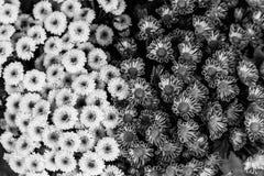 Bloemenboeketten in detail in achter en wit Royalty-vrije Stock Afbeelding