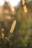 Bloemenbokeh met gras Royalty-vrije Stock Fotografie