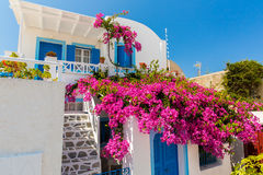 Bloemenbougainvillea in Fira-stad - Santorini, Kreta, Griekenland. Royalty-vrije Stock Fotografie