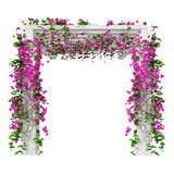 Bloemenbougainvillea, vooraanzicht Royalty-vrije Stock Afbeeldingen