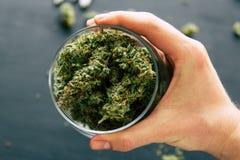 Bloemencannabis ter beschikking van mensen zwarte achtergrondkegelsknop van marihuana Royalty-vrije Stock Foto