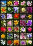 Bloemencollage Stock Foto's