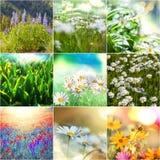 Bloemencollage Stock Afbeelding