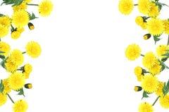 Bloemendecoratieelement Royalty-vrije Stock Foto's