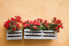 Bloemendozen die op de muur hangen Royalty-vrije Stock Afbeelding