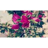 Bloemenfoto Royalty-vrije Stock Afbeeldingen