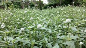 Bloemengebied Stock Afbeeldingen