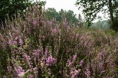 Bloemengebied Stock Foto