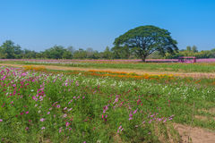 Bloemengebied en Grote Boom Stock Foto
