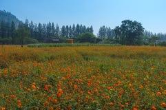 Bloemengebied in Landbouwbedrijf Stock Foto's