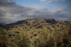 Bloemengebied met een bergachtergrond en wolken royalty-vrije stock foto's