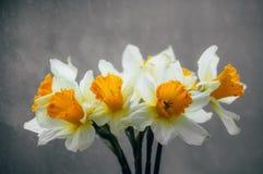 Bloemengele narcissen in een vaas royalty-vrije stock afbeelding