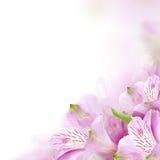Bloemengrens, bloesemachtergrond Stock Afbeeldingen