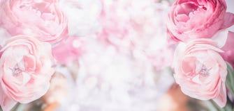 Bloemengrens met dichte omhooggaand van roze bleke bloemen en bokeh achtergrond Pastelkleur Feestelijke groet royalty-vrije stock afbeeldingen