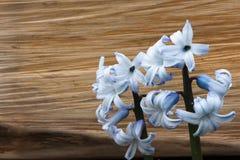 Bloemenhyacinten op de achtergrond van een houten blok stock afbeelding