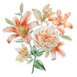 Bloemenkaart met bloemen Nam toe Lelie De illustratie van de waterverf Royalty-vrije Stock Foto