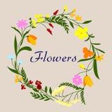 Bloemenkader met de bloemen en de kruiden van het de lentegebied Stock Afbeeldingen