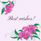 Bloemenkader met lelies Vector illustratie Royalty-vrije Stock Afbeelding