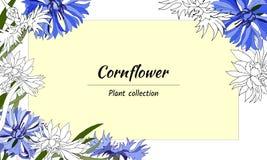 Bloemenkader van contour en blauwe de lentebloemen Voor decoratie, kaarten, groeten Vector illustratie royalty-vrije illustratie