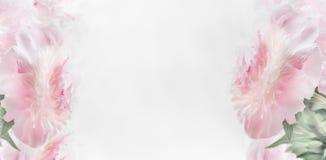 Bloemenkader van pastelkleur het roze pioenen op lichte achtergrond, banner Lay-out of groetkaart voor Moedersdag stock foto