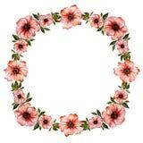Bloemenkaderillustratie Mooie Rode Bloemen met groene bladeren Rond patroon op witte achtergrond met ruimte voor uw tekst Stock Fotografie