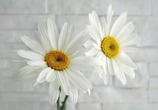 Bloemenkamille op witte muur royalty-vrije stock afbeeldingen