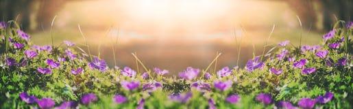 Bloemenklokken van de gebiedsachtergrond Het landschap van de lente toning Stock Afbeeldingen