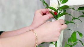 Bloemenkunstenaar die witte houten treden met groene installaties en bloemen, installatie verfraaien die idee verfraaien stock videobeelden