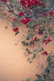 Bloemenmuur Stock Afbeeldingen