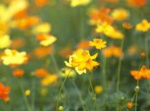 Bloemenonduidelijk beeld als achtergrond Stock Afbeeldingen
