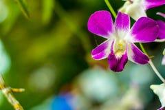 Bloemenonduidelijk beeld op de bokehachtergrond royalty-vrije stock foto's