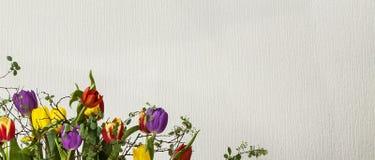 Bloemenontwerp - Tulpen. stock fotografie