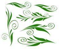 Bloemenontwerpelementen groen op geïsoleerd wit Stock Foto