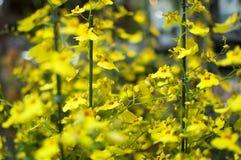 Bloemenorquideas stock afbeelding