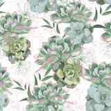 Bloemenpatroon, gevoelig bloembehang, witte kruiden en groene roze succulent royalty-vrije illustratie