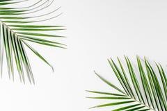 Bloemenpatroon met groene bladeren op wit achtergrond hoogste meningsmodel Stock Fotografie