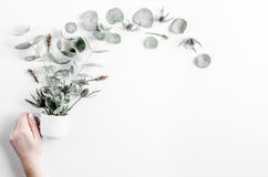 Bloemenpatroon met groene bladeren op wit achtergrond hoogste meningsmodel Stock Foto's