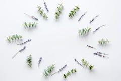 Bloemenpatroon met lavander en eucalyptus op wit achtergrond hoogste meningsmodel Royalty-vrije Stock Foto