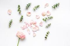 Bloemenpatroon met roze bloemblaadjes en eucalyptus op de witte mening van de lijstbovenkant Stock Fotografie