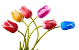 Bloemenpatroon van zes geschilderde tulp Royalty-vrije Stock Afbeelding