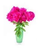 Bloemenpioen Royalty-vrije Stock Afbeeldingen