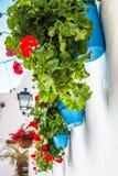Bloemenpotten in het land stock afbeeldingen