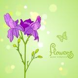 Bloemenpurple Royalty-vrije Stock Afbeelding