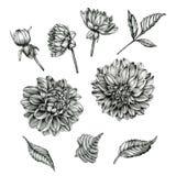 Bloemenreeks dahlia's en bladeren Royalty-vrije Stock Afbeeldingen