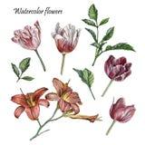 Bloemenreeks tulpen, lelie en bladeren Royalty-vrije Stock Afbeeldingen